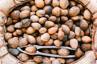 Close-up of almonds in shells