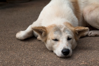 Close up of  dog sleep on Ground stone washed floor