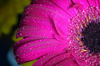 Close-up of flower with water droplets