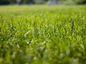 Close-up of grassy meadow