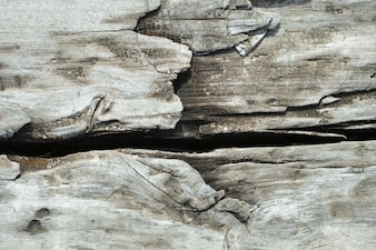 Close-up of hardwood