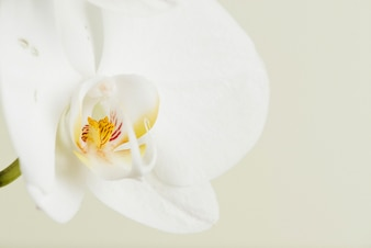 蘭、花、クローズアップ