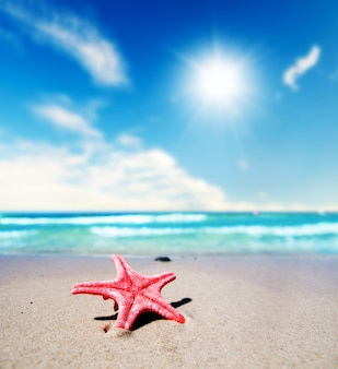 Close-up of pretty starfish on a summer day