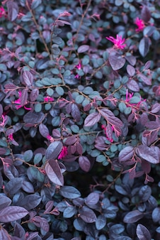 Close-up of purple and pink foliage