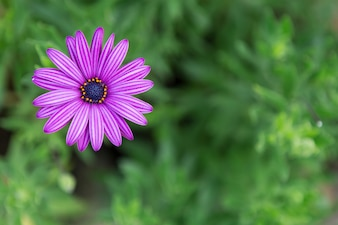 Close-up of purple flower with blurred background