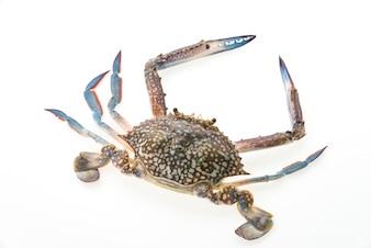 Close-up of raw crab