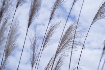 Close-up of reeds with cloudy sky
