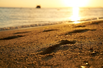 Close-up of seashore at sunset
