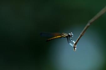 Закройте маленькую красивую стрекозу