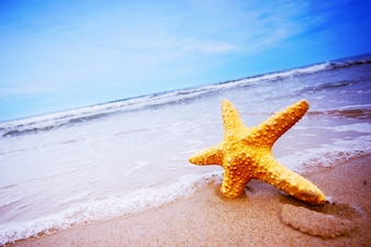 Close-up of starfish on the beach