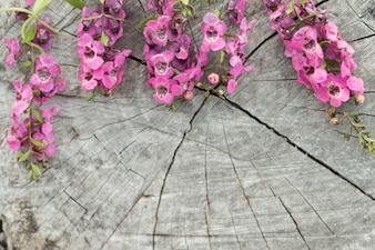 Close-up of stump with purple flowers