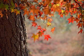 Close-up of tree trunk with leaves in warm colors