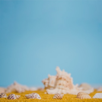 Close up view of seashells on sand