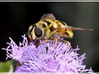 Close Wasp