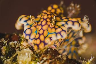Closeup of a nudibranch