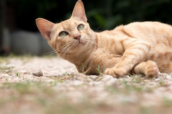 Closeup of cute yellow cat stay on floor.