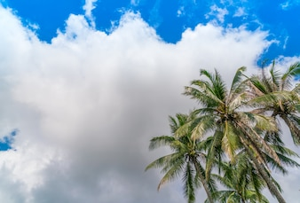 Coconut palm trees . ( Filtered image processed vintage effect.