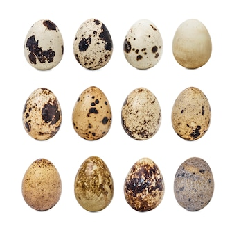 Collection of quail eggs