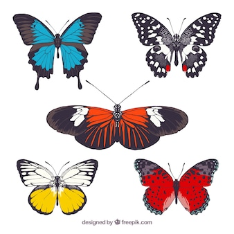 Colorful butterflies collection
