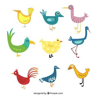 Colorful cartoon birds