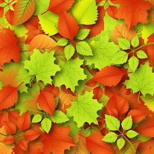Colorful fall leaves autumn background