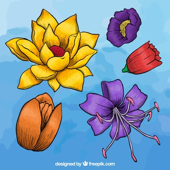 Colorful flowers in hand drawn style