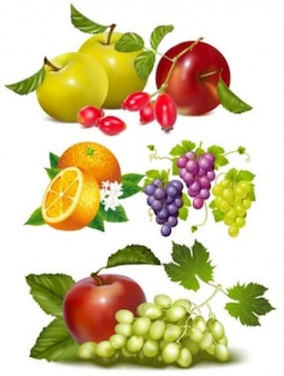 Colorful fruits vector