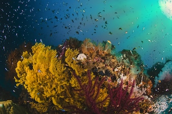 Colorful underwater offshore rocky reef with coral and sponges a