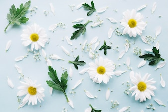 Composition of daisies, little flowers and leaves on a light blue surface