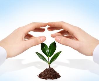 Conservation seedling idea springtime sprout