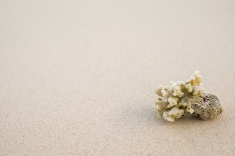 Coral on a beach background.