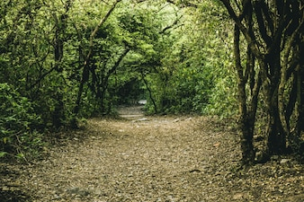 Country environment track leaf rambling footpath