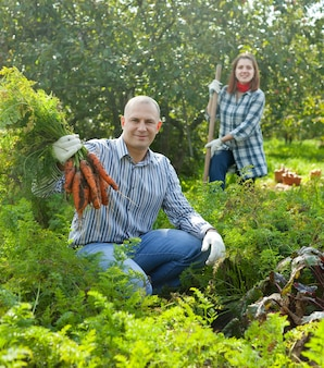 Couple  harvesting carrots