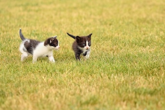 Couple of kittens playing