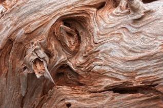 cracked beachwood texture   hdr  burnt