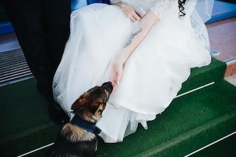 Crop bride and groom stroking dog