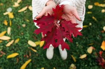 Crop hands holding leaf
