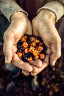 果実の山で作物の手