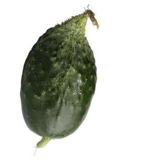cucumber  food