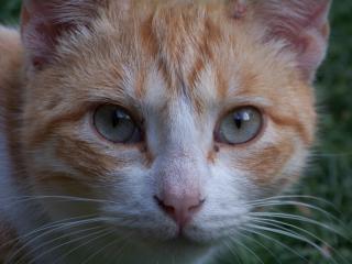 Curiosity, tomcat