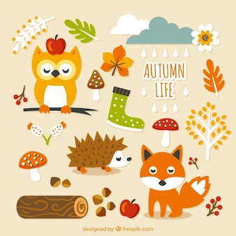 Cute autumn life