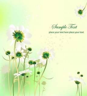 Daisies - summer background