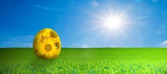 Daisy egg in a field