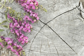 Damaged surface with beautiful flowers