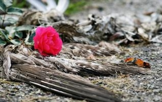 dead bird and rose