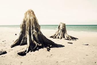 Dead trunks on the beach.