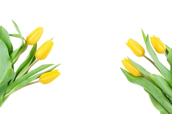 Decorative blooming tulips