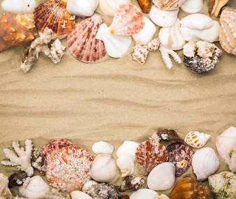 Decorative seashells on sandy background