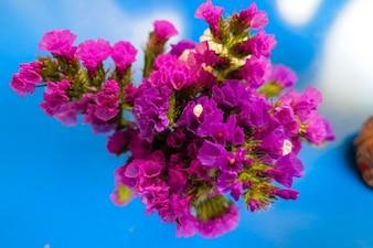 Deep violet flowers