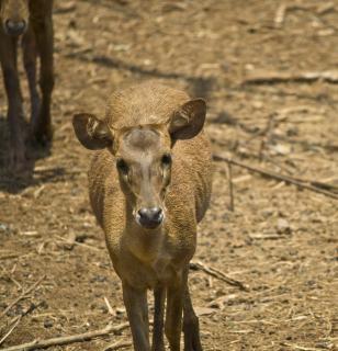 Deer Buck, nobody